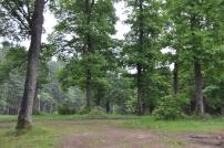 forest area around track