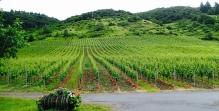 Vineyards, Cochem